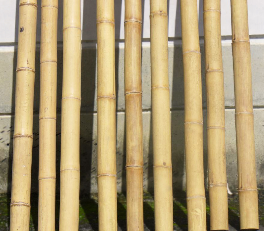 Tall Bamboo Sticks ~ Bambusa mietiņi horticom